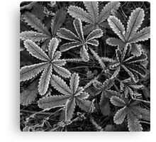 Frost #7 Canvas Print