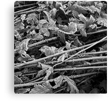 Frost #8 Canvas Print