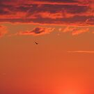 Bird in orange sunset by hummingbirds