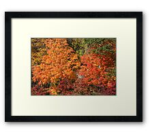 Flaming Autumn Framed Print