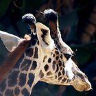 Baby giraffe second time by loiteke