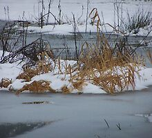 Snow Grass Water by Jonice