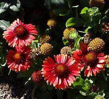 Flor's flowers by Liesl Gaesser