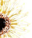 Scribbler Sunflower by Rhonda Blais