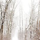 Snow Storm by Jarede Schmetterer