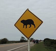 Capibaras crossing by mbaialardi