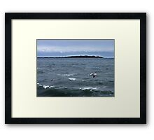 Trial Island and Seabirds Framed Print