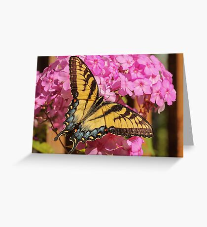 Swallowtail Butterfly and Flower Greeting Card