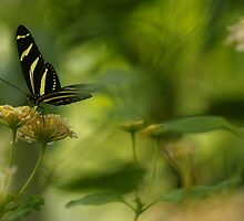 """""""Gliding in Pure Bliss-Conservatory Butterfly"""" by KatWolfe"""