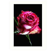 Neon Pink Rose Art Print