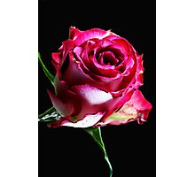 Neon Pink Rose Photographic Print