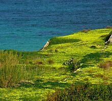 Fields of Gold - Selmun, Malta by leslievella64