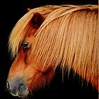Pony study by Alan Mattison