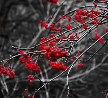Winter Berries by Doug Graybeal