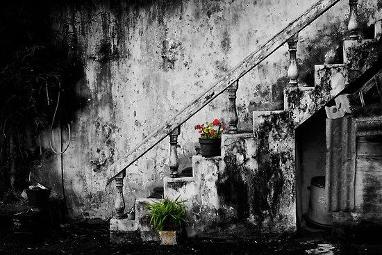hidden beauty by werxj