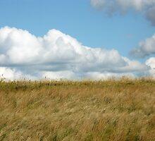 Prairie Land by Karen  Rubeiz