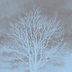 Winter Trees II by Mary Campbell