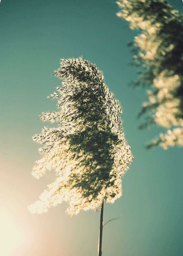 wind in the marshgrass by lucy loomis