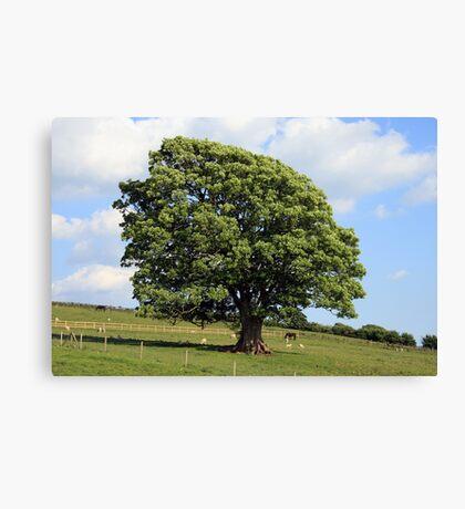 Oak Tree in a Field Canvas Print
