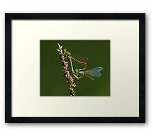 Complicated Love Framed Print