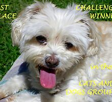 1st Place Challenge Winner - Cats & Dogs Group by Wilhelmina