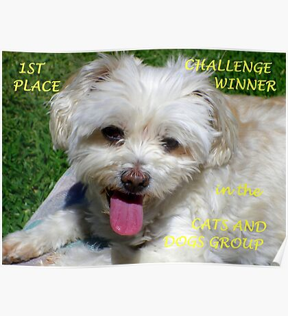 1st Place Challenge Winner - Cats & Dogs Group Poster