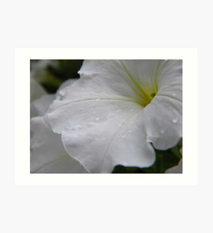Dew on white flowers Art Print