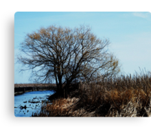 Point Pelee, Ontario Canvas Print
