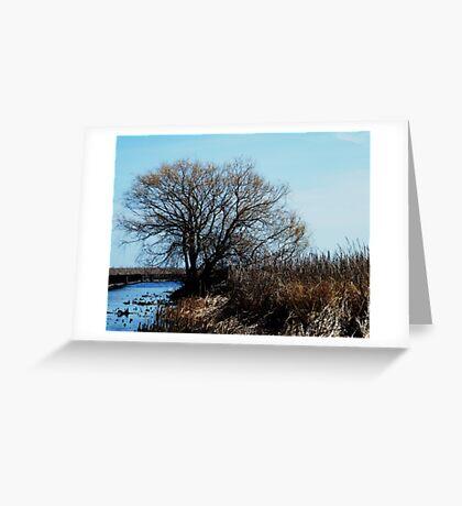 Point Pelee, Ontario Greeting Card