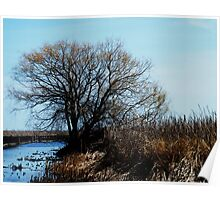 Point Pelee, Ontario Poster