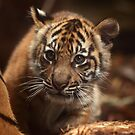 Baby Tiger - Wonder by Daniela Pintimalli