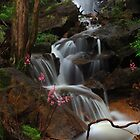 Cascade of the Hyacinth Orchid by Donovan wilson