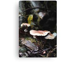Mushrumps, again - Pacific NW Canvas Print