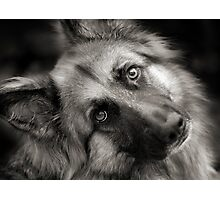 A Shepherd Moment Photographic Print