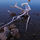 Mono Lake Deadwood by Anne McKinnell