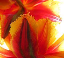 Pretty flowers in Washington Park by Jennk89