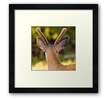 Velvet Antlers Framed Print