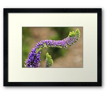 Purpled Curved Flowers Framed Print