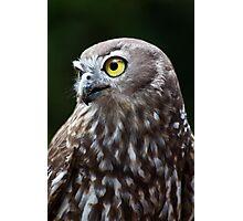 Owl 2 Photographic Print