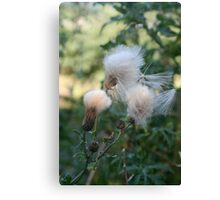 Thistles in the Wind Canvas Print