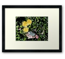 a patch of clover Framed Print
