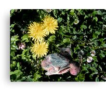 a patch of clover Canvas Print