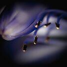 ...the quiet light... by Geoffrey Dunn