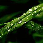 Raindrops by Kym Howard