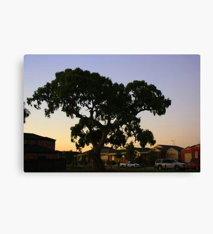 suburbian gum tree Canvas Print