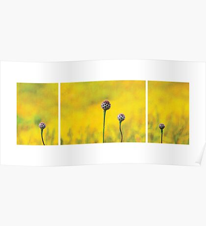 Yellow Garden Poster