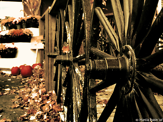 Wagon Wheels by Marcia Rubin