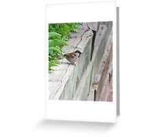 BIRD ON A LEDGE  Greeting Card
