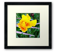 YELLOW BLAZE FROM NOWHERE Framed Print