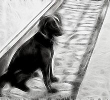 The abandoned dog by Britta Döll